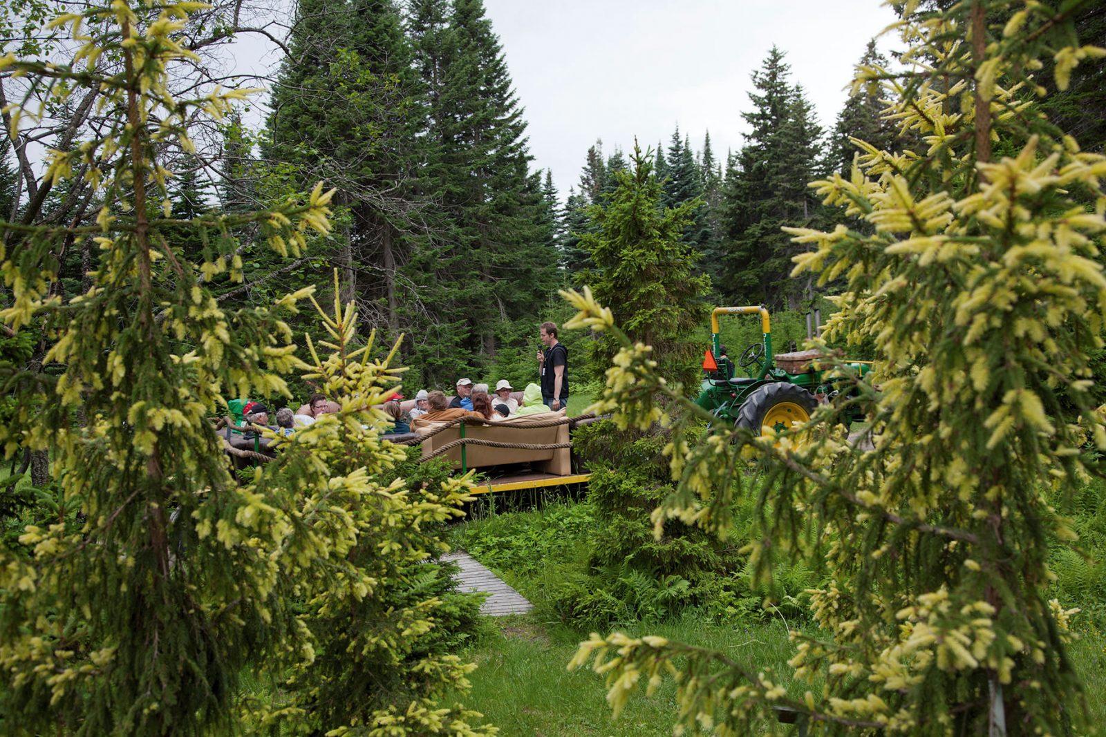 Opastettu kierros Luken tutkimus- ja puulajipuistoon